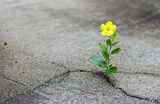 Flower growing in concrete
